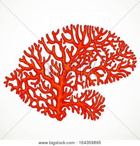 Red Corals Sea Life Object 2  Isolated On White Background