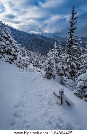 Winter Trail In Tatras Mountains At Dawn, Tatra, Poland