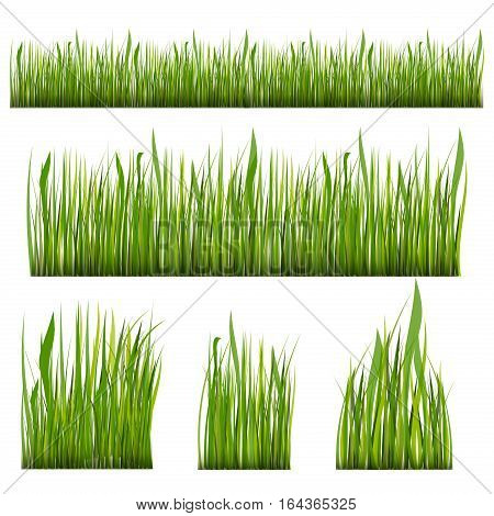 Green grass borders set season foliage abstract. Vector Illustration green grass nature meadow field. Plant environment fresh lush growth day land pattern.