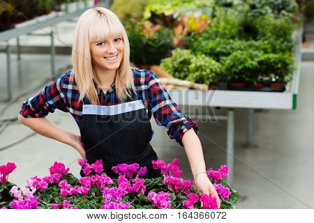 Gardener Florist woman to care for potted flowers, working in the garden shop. Love working with flowers