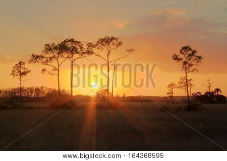 Florida Everglades Sunset in Big Cypress National Preserve (HDR)