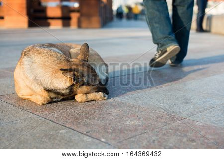 Homeless dog lies in the street against indifferent people