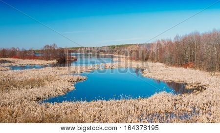 Panorama Spills Of River In Spring Season In Belarus. Sunny Spring Day. Belarusian Beautiful Landscape. Yellow Dry Grass Under Blue Sunny Sky.