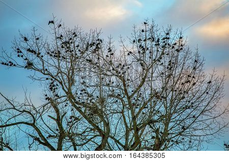 a flock of crows sitting on a tree