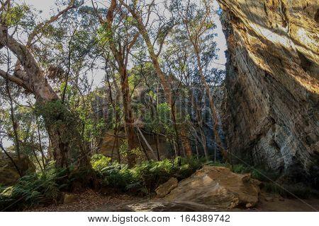 A Blue Mountains bush scene in NSW, Australia