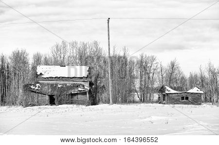 An abandoned and crumbling old two story house overgrown with vines and a log shed in front of bare trees in a black and white winter landscape