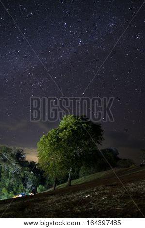 Alone tree with star field, night sky