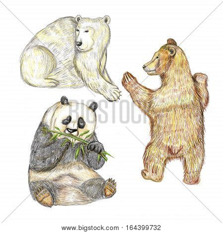 Raster cute pencil set of three bear cubs - panda,  white and brown ones. Animal theme, design element, illustration for kids' stuff and publishing, zoological and biological image.