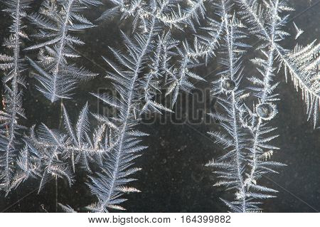 Close up of intricate white ice crystals with a leaf or fern like pattern on a window pane with dark gray in the background. Photographed in natural light with shallow depth of field.