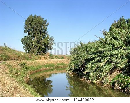 Bulrush on Ayalon River near Or Yehuda Israel April 28 2005
