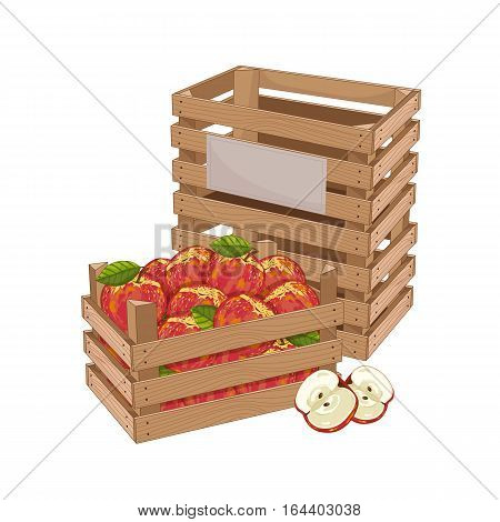 Wooden box full of apple isolated on white background vector illustration. Fresh fruit, organic farming, vegan food, delivery farm product, grocery store concept. Red ripe apple in wooden crate icon.
