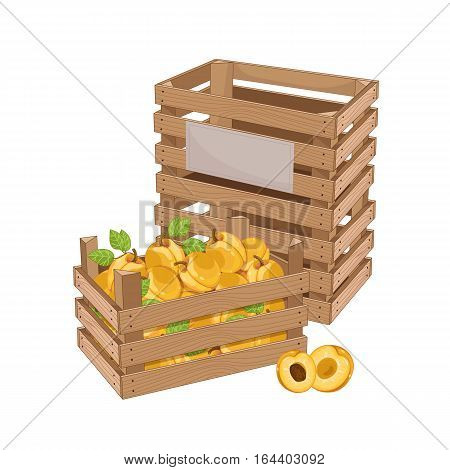 Wooden box full of apricot isolated on white background vector illustration. Fresh fruit, organic farming, vegan food, delivery farm product, grocery store. Yellow ripe apricot in wooden crate icon.