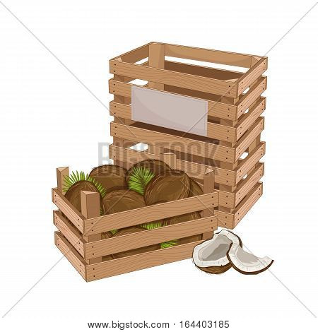Wooden box full of coconut isolated on white background vector illustration. Fresh fruit, organic farming, vegan food, delivery farm product, grocery store concept. Ripe coconut in wooden crate icon.