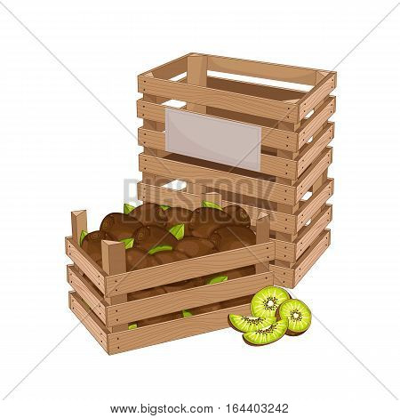 Wooden box full of kiwi isolated on white background vector illustration. Fresh fruit, organic farming, vegan food, delivery farm product, grocery store concept. Ripe kiwi fruit in wooden crate icon.