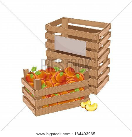 Wooden box full of peach isolated on white background vector illustration. Fresh fruit, organic farming, vegan food, delivery farm product, grocery store concept. Ripe peach in wooden crate icon.