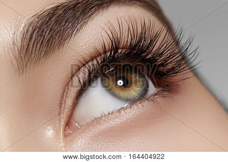 Beautiful macro shot of female eye with classic clean makeup. Perfect shape of eyebrows brown eyeshadows and long eyelashes. Cosmetics and make-up. Closeup macro shot of fashion natural eyes visage