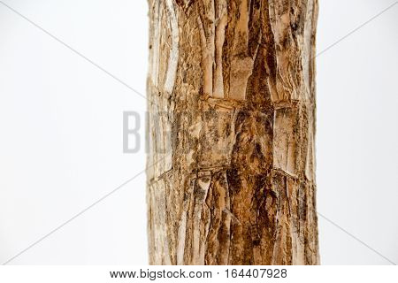 Plant Trunk Detail