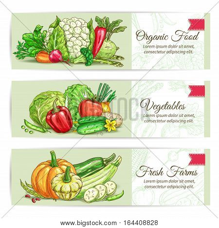 Organic vegetables sketch banner set. Fresh farm veggies label with tomato, carrot and pepper, onion and broccoli, cucumber, pea and pumpkin, zucchini and bean, cabbage, potato, cauliflower, kohlrabi, asparagus