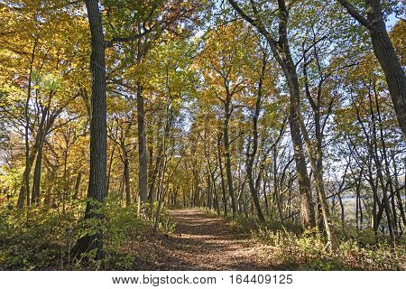 Walk Through a Fall Forest in Wyalusing State Park in Wisconsin