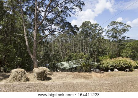House located in tranquil nature amongst tall gum trees in Yandina hinterland Queensland Australia