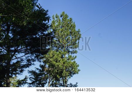 Trees with blue sky to the right