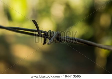 Slender eared wire with green background (metal)