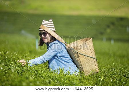 Traveler enjoying in the tea plantation, Thailand