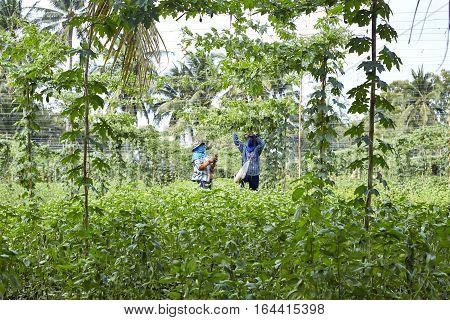 Vegetable Gardeners organic at Damnoen Saduak Damnoen Saduak in Thailand