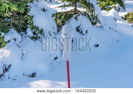 Glove on the walking stick in the winter forest