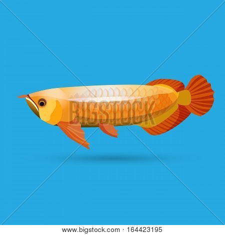 Golden thin arowana swimming in blue water. Vector illustration of long ancient fish with plain colouring. Freshwater bony fish bonytongues. Strange yellow inhabitant of seas, rivers or lakes.