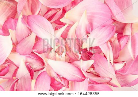 Abstract background of pink petal lotus flower.