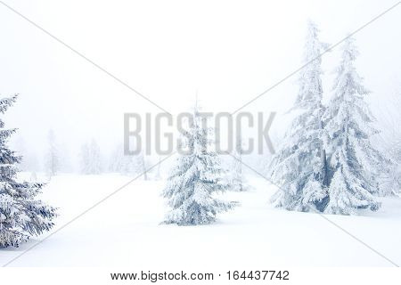 winter forest with snow and frost and fog