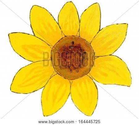 One sunflower on white background painting illustration