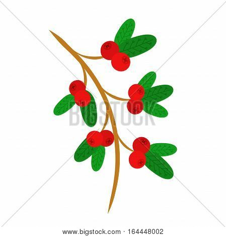 Cowberry lingonberry in flat vector style. Sweet red forest berries on the branch. Cranberry.