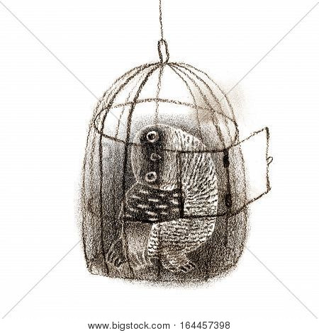 Black owl sitting in a birdcage. Isolated on white. Original high resolution graphic artwork.