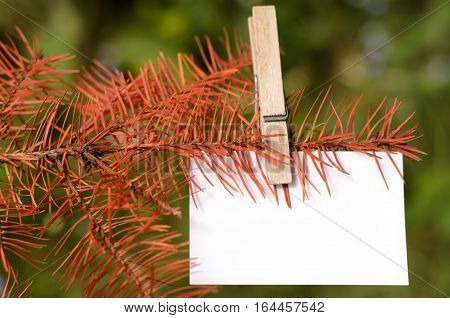 Blank card pinned on a branch of dead tree. Space for wordings. Pinned with a clothespin