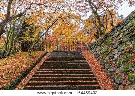Stairs going uphill in a peaceful forest in autumn.