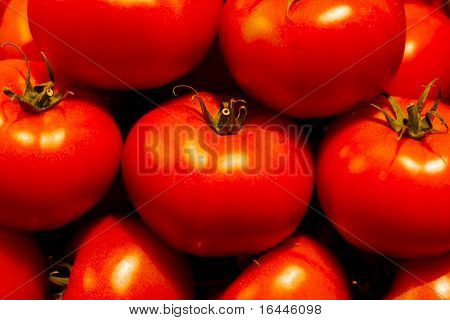 Genetically Modified Tomatos