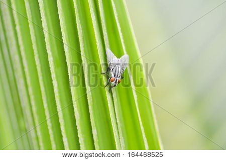 fly or bug on the green leaf