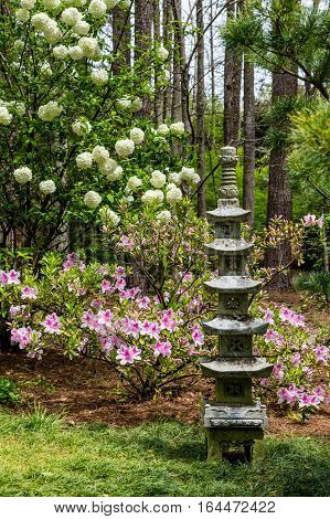 Pink Azalea and Snowball Bush in Japanese Garden
