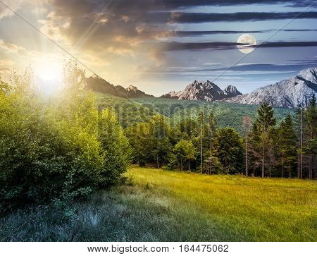 Spruce Forest On A Meadow In Tatras