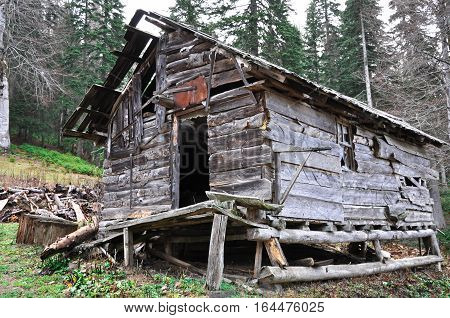 Shabby wooden hut in the forest. Early autumm day.