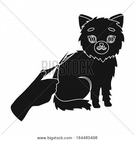 Grooming of a cat icon in black design isolated on white background. Veterinary clinic symbol stock vector illustration.