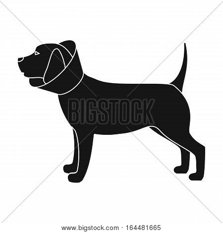 Dog with elizabethan collar icon in black design isolated on white background. Veterinary clinic symbol stock vector illustration.