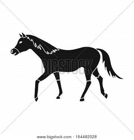 Horse icon in black design isolated on white background. Hippodrome and horse symbol stock vector illustration.