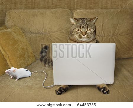The cat is sitting on a couch and staring at his laptop. There is a computer mouse next to him. This mouse looks like a real mouse.