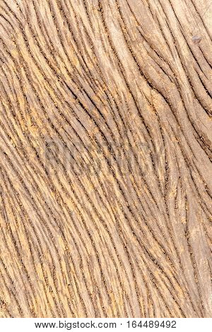 Close up rough wood texture with natural pattern.