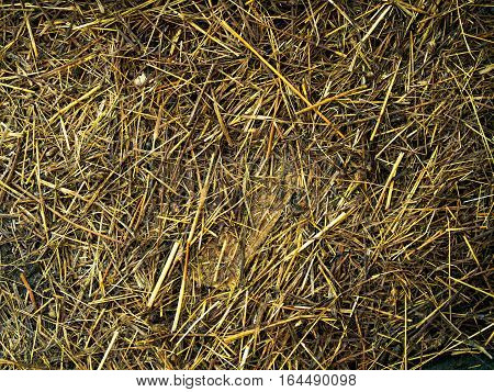 fall hay straw texture background wallpaper closeup