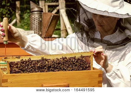 Apiary - woman beekeeper in white worksuite with bees
