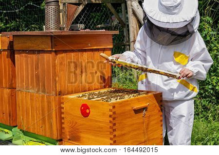 Apiculture - beekeeper in white worksuitewtih lot of bees